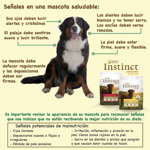 Simples señales que nos pueden indicar si nuestro perro está recibiendo la nutrición que necesita de su alimento concentrado.