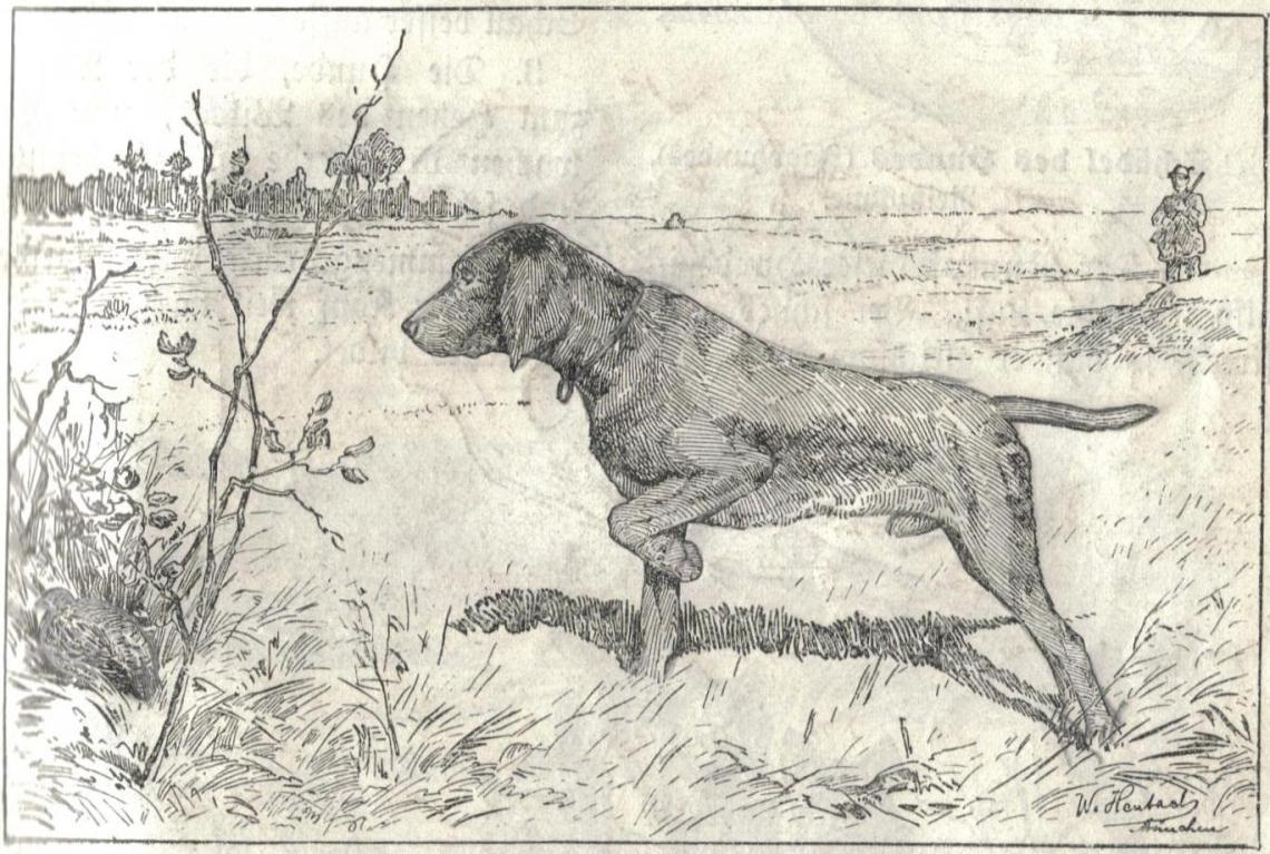 Heubach_hunting_dog.jpg