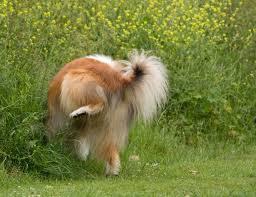 perro-orina
