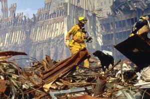 perros-de-rescate-9-11